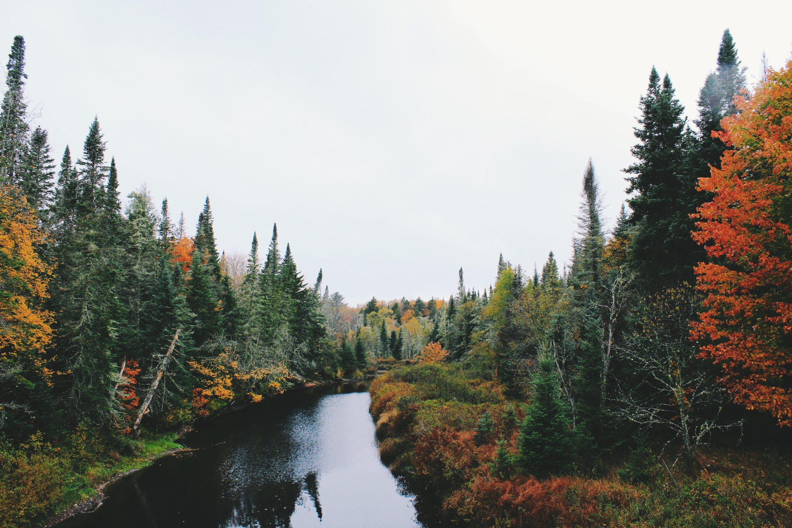 Forest River Scene Wallpaper