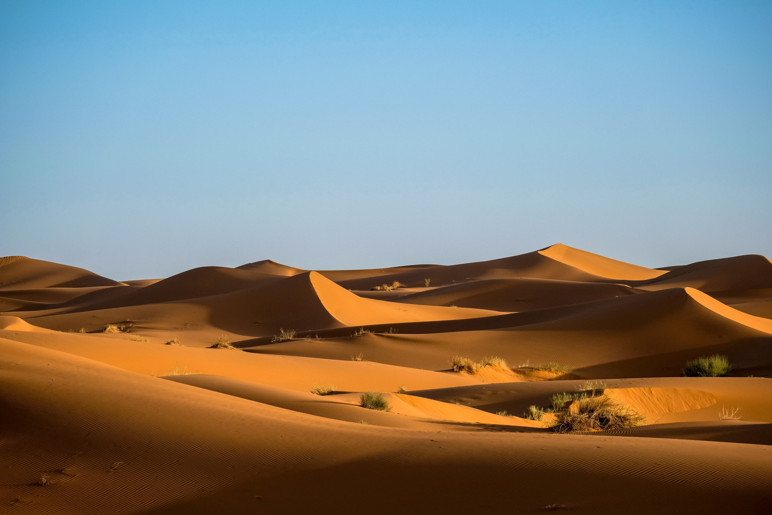 Insightful Contemplations with Desert Landscape