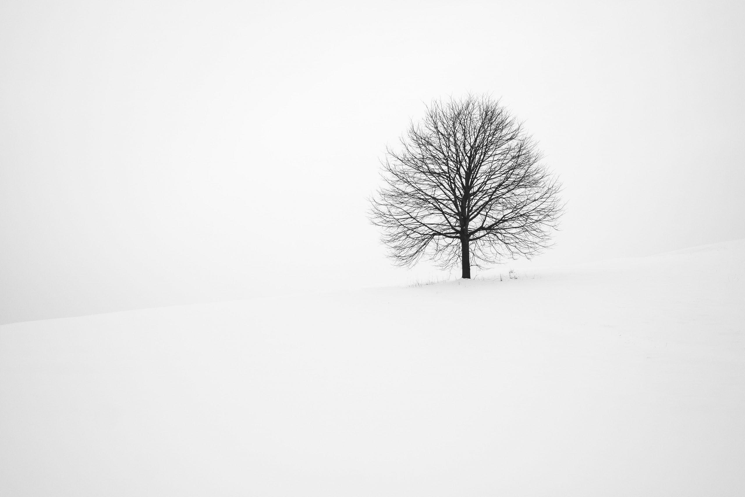 Minimalist Winter Wallpaper