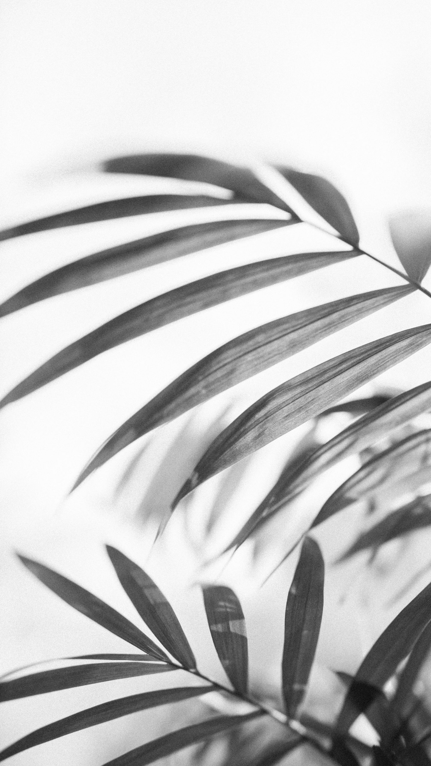 Monochromatic Ferns Wallpaper