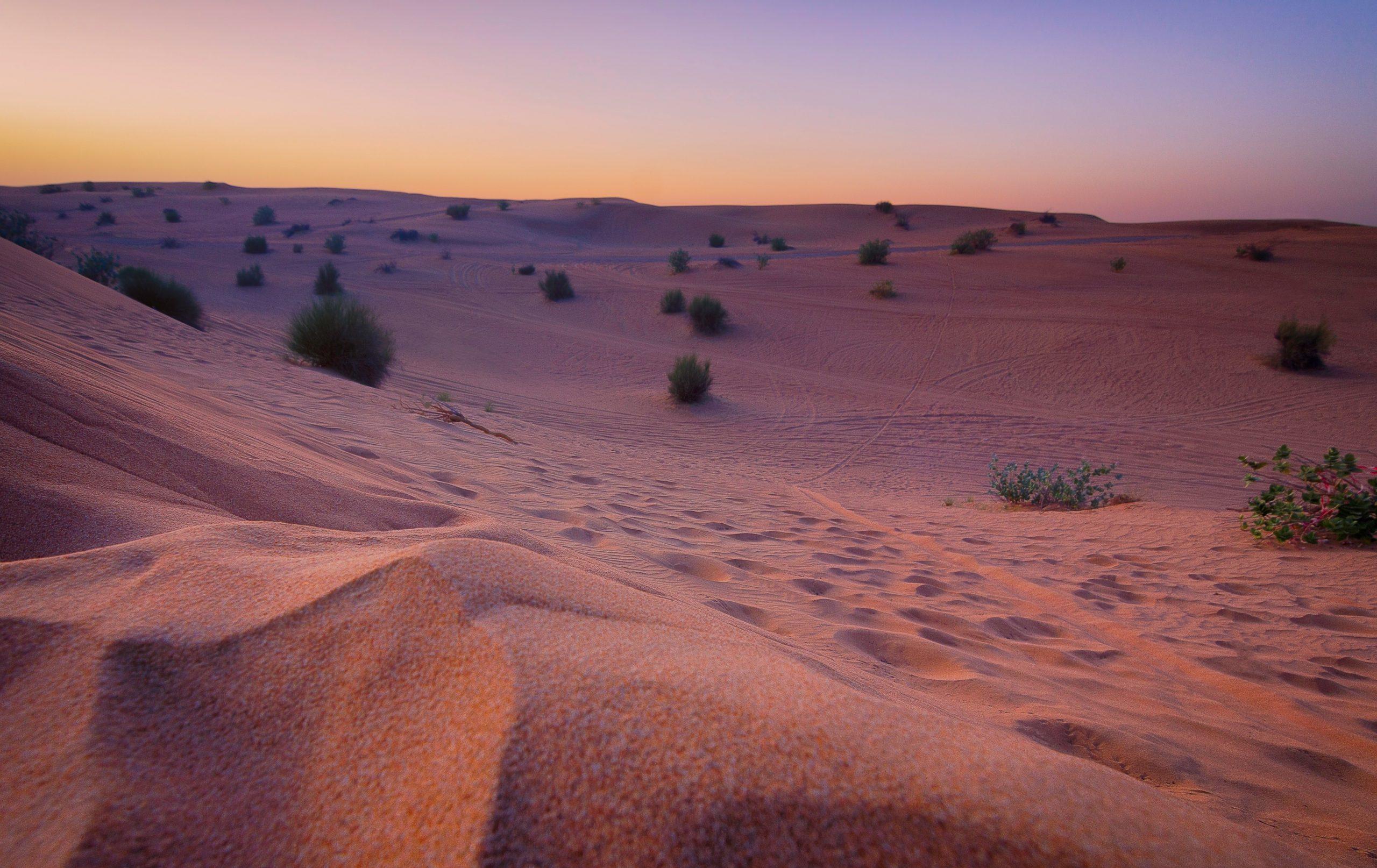 Rigidly Dry Transcendental Desert Beauty