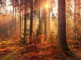 Sunlit Autumn Forest HD Wallpaper