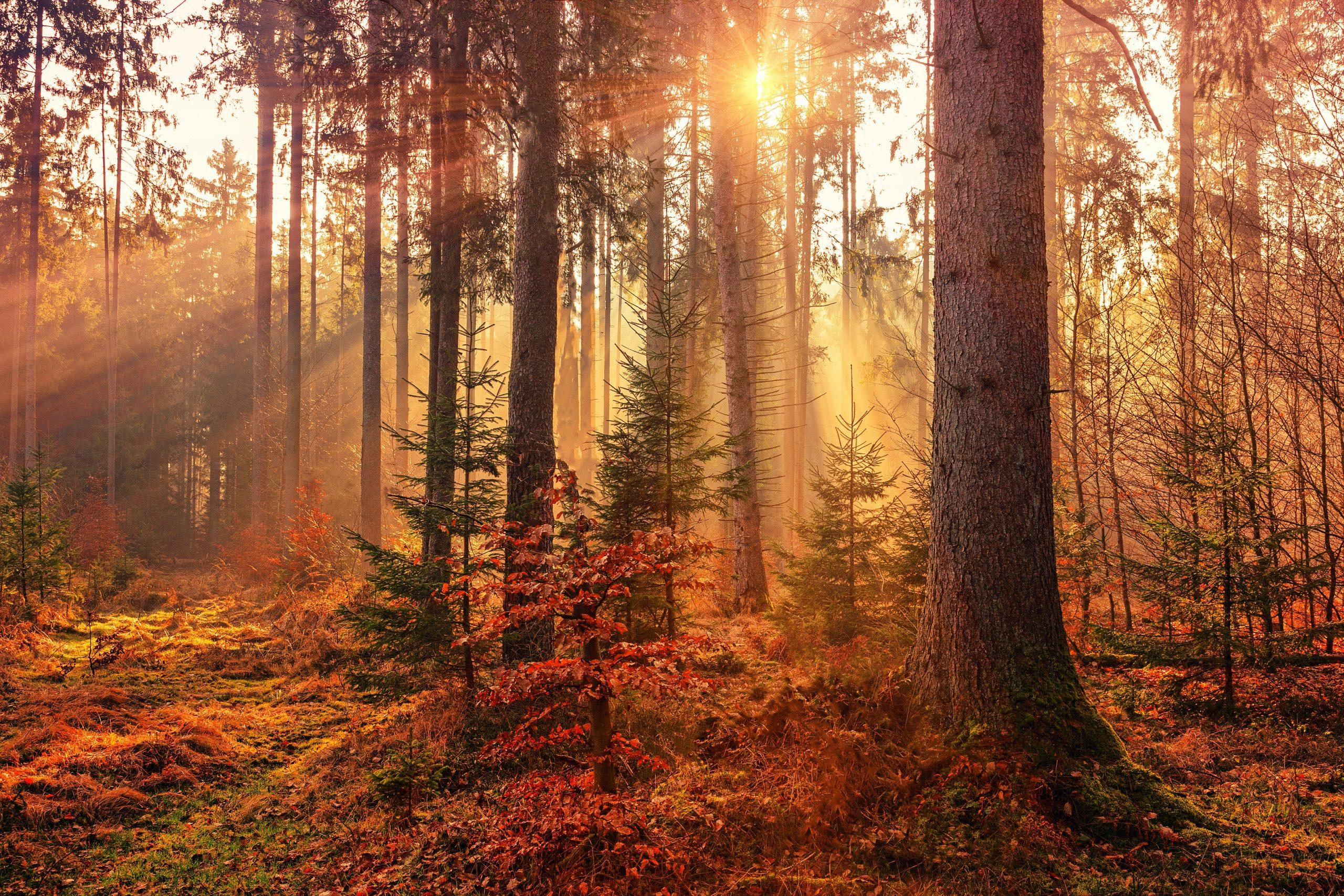 Sunlit Autumn Forest HD Wallpaper