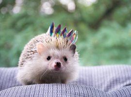 Tiny Hedgehog Wallpaper