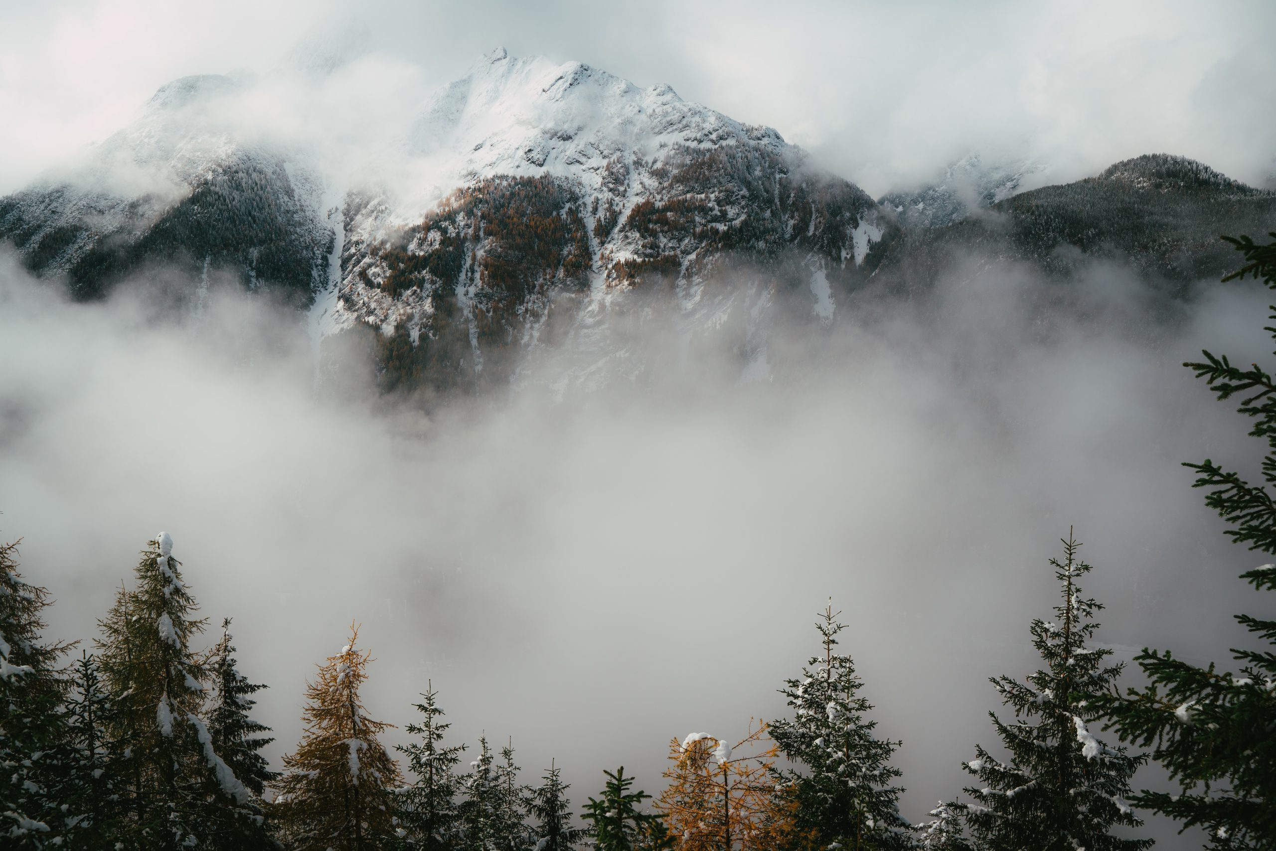 Tree and Mountain Landscape Wallpaper