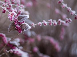 Winter Flower Wallpaper