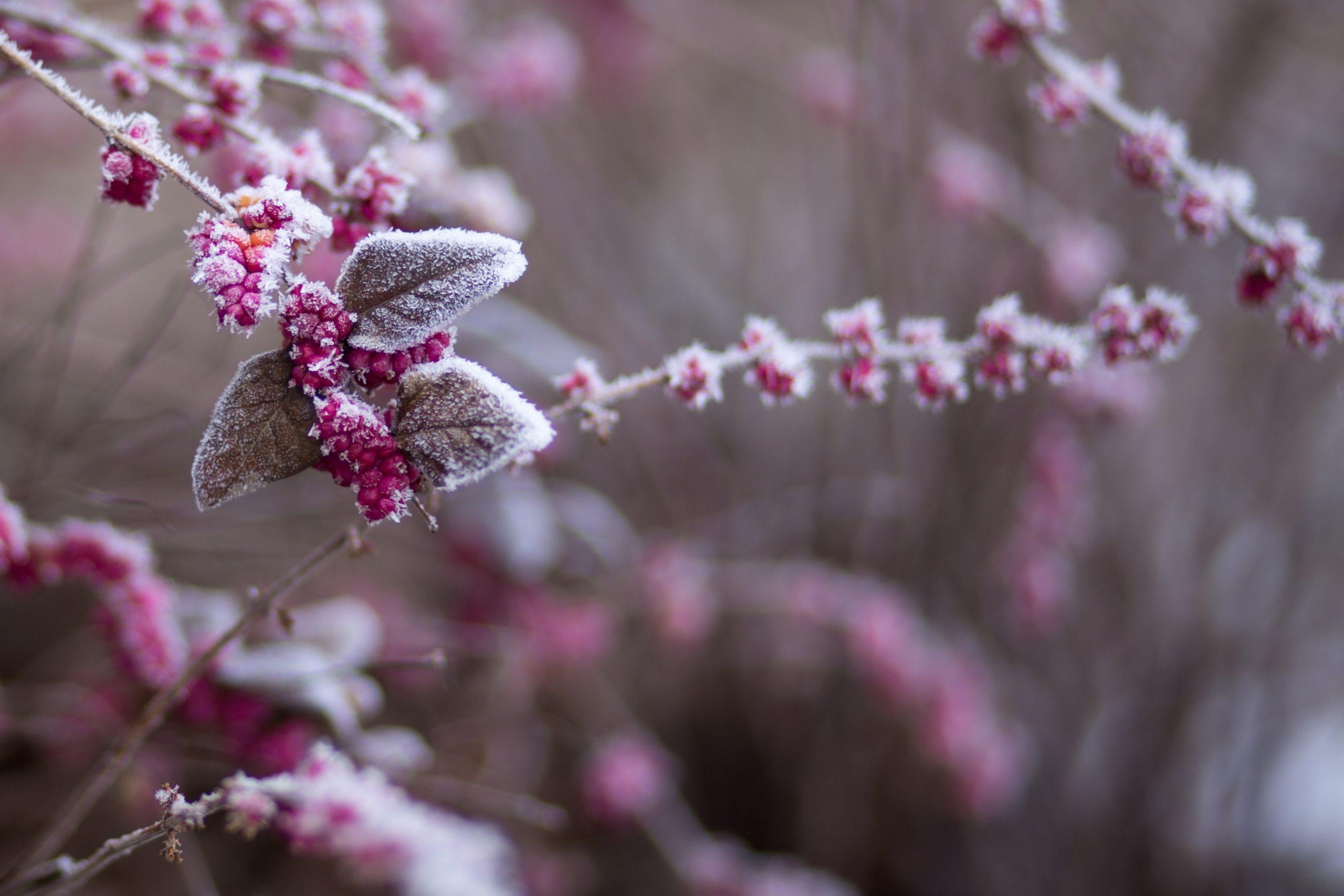 Winter Flower Wallpaper